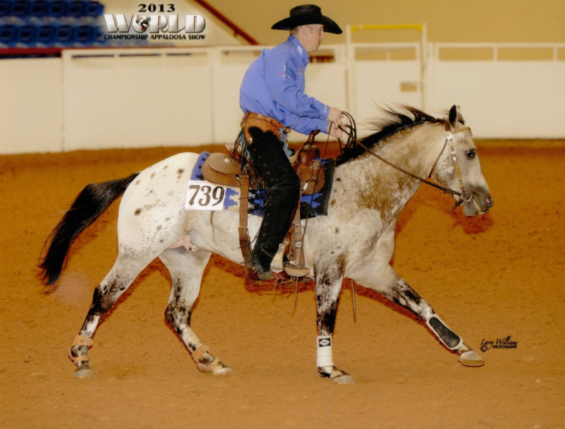 Five Bars of Silver reining at 2013 Appaloosa World Show. Champion run